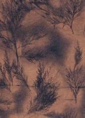 Bleached Fabrics