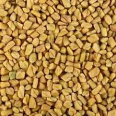 An extensive range of Fenugreek Seeds is widely