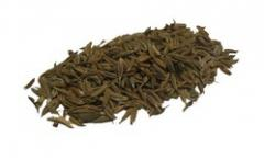 Cumin is the dried seed of the herb cuminum
