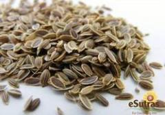 Dill seed oil is extracted from the seeds of a