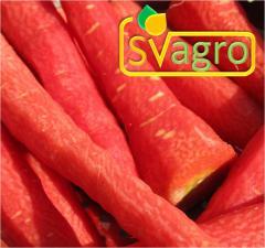 Spray Dried Carrot Powder