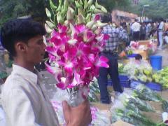Fresh cut flowers, Orchids