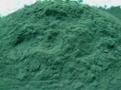 Green Spirulina Powder