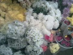 Fresh cut Chrysanthmums