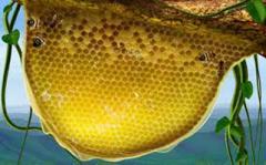Uttarakhand Honey