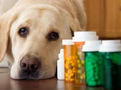 Veterinary medication
