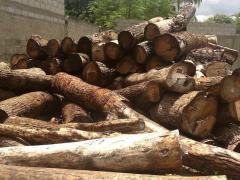 Umbila wood, Pterocarpus angolensis