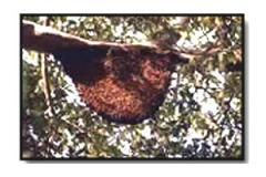 Bee-bread