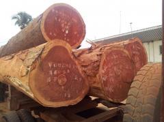 Padouk logs