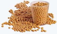 Soya Bean Meal And Other Feed Meals