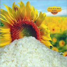 Sunflower Wax (Carnauba Wax)