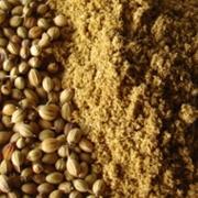 Coriander seeds (Dhaniya)