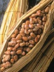 Nattolife (Nattokinase enzyme)