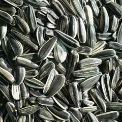 Sun flower seeds