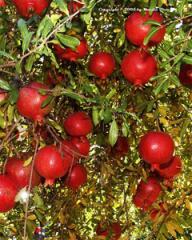Plant Growth Fertilizer