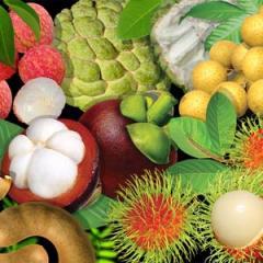 Biofertilizer for Sugarcane, Symbiotic Nitrogen