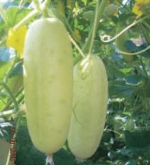 Cucumber Seed