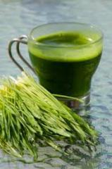 High quality Wheat Grass Powder
