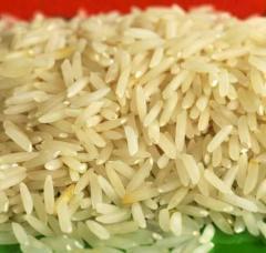Ir-8 Rice Non Basmati Rice