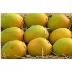 Farm Fresh Alphonso Mangoes