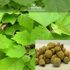 Khamer Tree seeds ( Gmelina arborea )