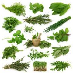 All Kind Of Medicinal Herbs
