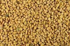 Seeds of fenugreek