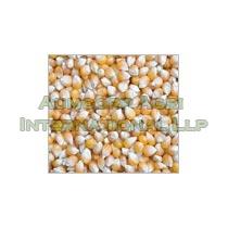 Golden Yellow Maize Seeds