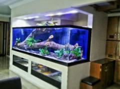 Fresh water aquarium fish tank
