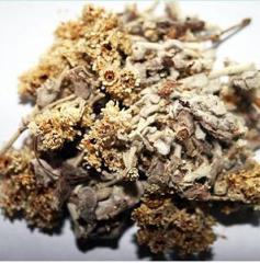 Helyichrisum Italicum
