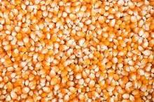 Makai [Maize, Red Maize]