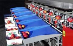 Apple grading machines, apple plastic crates,