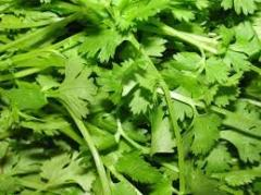 Coriander Leaves, Coriander Plants