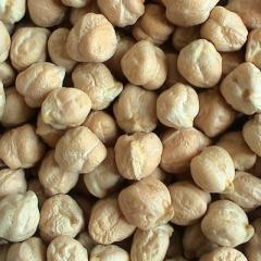 CHICK PEAS SEEDS