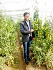 All Types of Green Houses, Films From Gineger