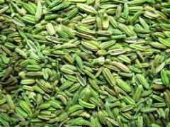 Fennal Seeds