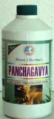 Panchagavya Bio Fertilizers