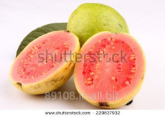 Pink guava and white guava fruits suppliers for pulping to factors
