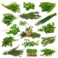 All Kind Of Ayurvedic Herbs