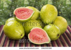 FRESH PINK GUAVA FRUITS OF PULPING