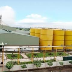 Oil Mill / Expeller