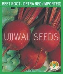 BEET ROOT seed