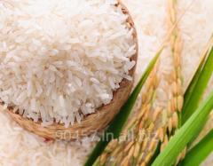 IR-36 Non Basmati Rice