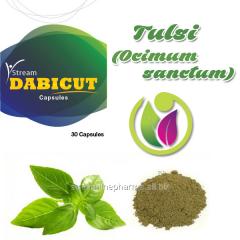 Tulsi ( Ocimum Sanctum) Medicine