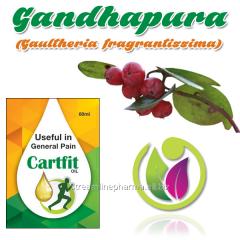 Gandhapura (Gaultheria fragrantissima)