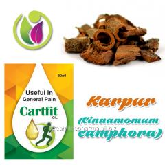 Karpur (Cinnamomum camphora)