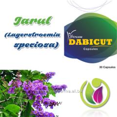 Jarul  (Lagerstroemia speciosa)