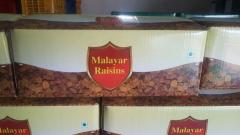 RAISIN MALAYAR B ROUND