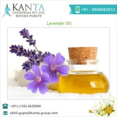 100% Fresh Lavender Oil Supplier