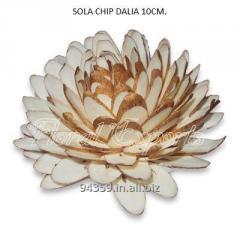 SOLA CHIP DAHLIA 10CM.